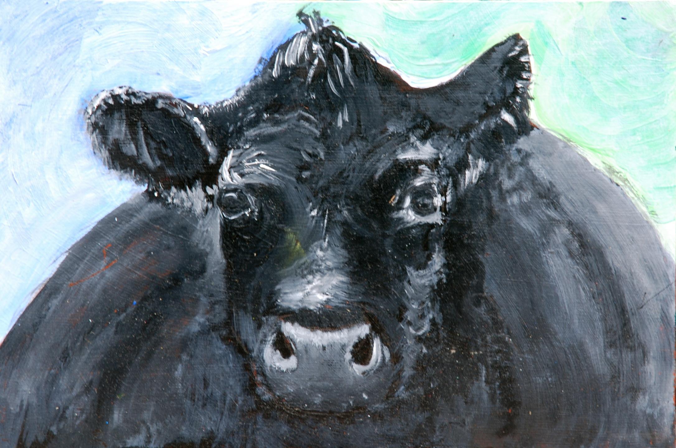 043 - Drijfnatte koe